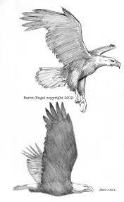 bald eagles 02 by baron engel on deviantart