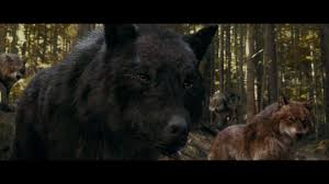 twilight wolf wallpaper hd images twilight wolf collection nm cp
