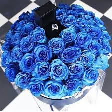 blue rose rings images Roses image 3841828 by winterkiss on jpg