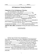 cell membrane coloring worksheet worksheet resources for