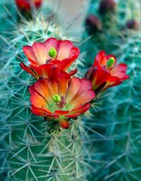 desert flowers sobad adventures