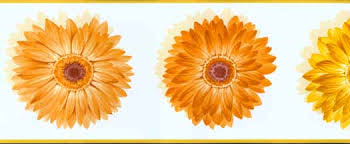 yellow daisy wallpapers yellow and orange daisy wallpaper border cu78221b wallpaper