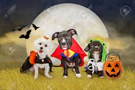 Dog Ghost Halloween Costumes by Halloween Dog Images U0026 Stock Pictures Royalty Free Halloween Dog