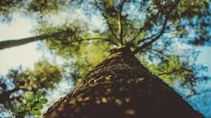 tree service nanaimo tree removal nanaimo bc