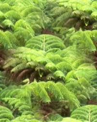 Tropical Rainforest Plant Species List - tedlillyfanclub rainforest plants tropical rainforest plants