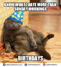 Birthday Meme Cat - grumpy cat happy birthday meme funny cute angry grumpy cats
