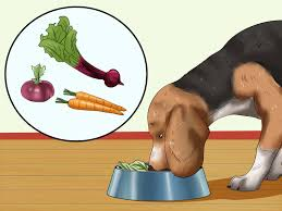 3 ways to treat dog worms with food and herbs wikihow