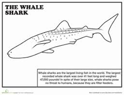 20 sharks shark week coloring pages education