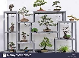 japanese bonsai trees on display inside montreal u0027s botanical