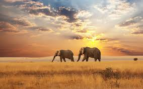 Beautiful Landscape Photos by Hd Elephants Wallpapers And Photos Hd Animals Wallpapers