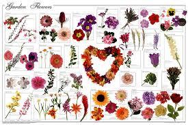 garden flowers poster jpg