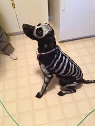 skeleton dog non toxic and washable paint really easy dog