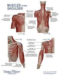 Anatomy Of Human Body Pdf Yoga Anatomy Ebook Anatomy For Yogis