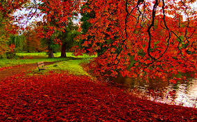 autumn pumpkin wallpaper widescreen nature wallpaper hd red fall leaves wallpapers for iphone at