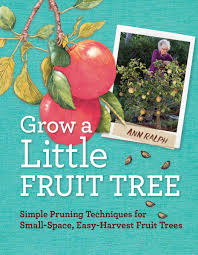 grow a little fruit tree simple pruning techniques for growing