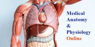 Study Anatomy And Physiology Online Anatomy Physiology Study Anatomy And Physiology Online College