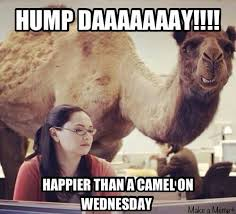Wednesday Hump Day Meme - hump day wednesday hump day pinterest humour funny stuff