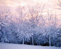 panoramio photo of frosted trees 1980