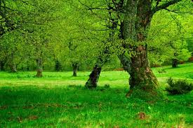 green tree and moss in forest stock photo colourbox