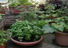 container gardening ideas for flowers vegetable container garden