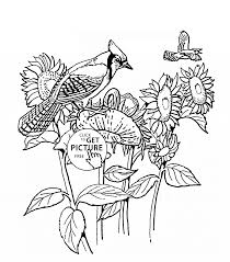 sunflowers and blue jay bird coloring page for kids flower
