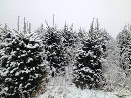 what we offer mountain memories christmas tree farm