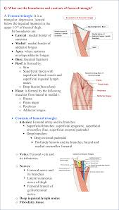 Borders Of The Heart Anatomy Anterior Compartment Of Thigh Anatomy Qa
