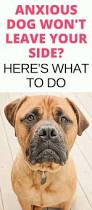best 25 dog separation anxiety ideas on pinterest puppy care