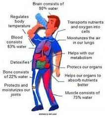 Which Cell Helps In Movement Of Bones 11 Benefits Of Drinking Water
