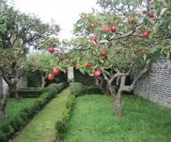albero giardino come piantare un albero da frutto le tecniche corrette e i