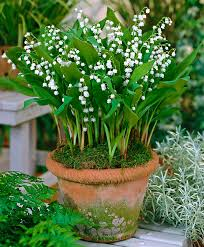 Pinterest Gardening Crafts - 452 best creative plant ideas images on pinterest gardening