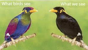 uv light for birds uv receptors back yard biology