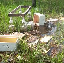 naples bees hobby beekeeping at naples florida