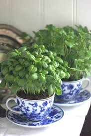 Indoor Herb Planters by Best 20 Indoor Planters Ideas On Pinterest U2014no Signup Required