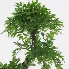 artificial tree tropical fruticosa tree deluxe artificial tree plant 6ft