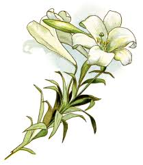 easter lily images free download clip art free clip art on