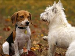 what to do about dog fight