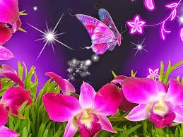 download flowers hd wallpapers