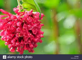 decorative plant south america ornamental plants garden green