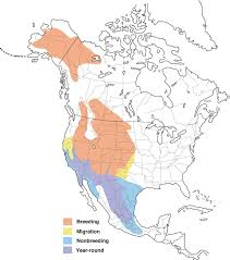 Bluebird Map Say U0027s Phoebe Range Map All About Birds Cornell Lab Of Ornithology