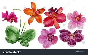 watercolor illustration orchid botanical art set stock