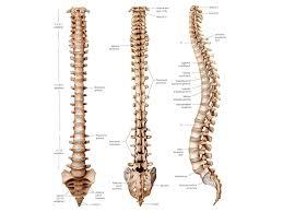 Diagram Of Knee Anatomy Human Body Back Human Body Organs Diagram Human Anatomy Charts