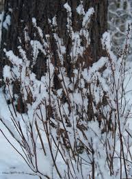 the garden in winter u2013 gardening in tune with nature bdn maine blogs