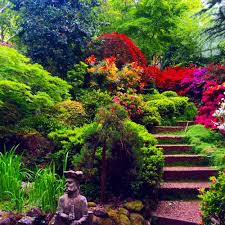 live forest glade gardens mount macedon australia
