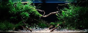 nature habitat design 7 1 09