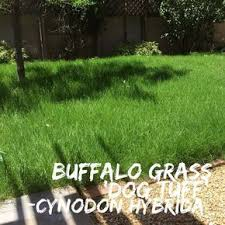 best 25 grass plugs ideas on grass pavers permeable