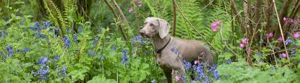 554 dog friendly cottages self catering pet friendly cottages