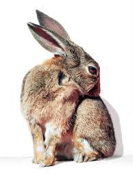 free stock photo of adorable animal bunny