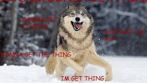 Wolf Memes - moon moon the most retarded wolf is the king of memes