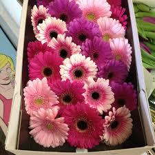wholesale fresh flowers 60 best diy purple flowers wedding flowers images on